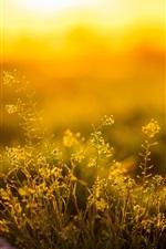 Preview iPhone wallpaper Grass, sunlight, morning