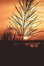 Preview iPhone wallpaper Grass, sunrise, dawn