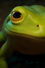 Preview iPhone wallpaper Green frog front view, eyes