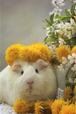 Preview iPhone wallpaper Guinea pig, dandelions, cherry flowers