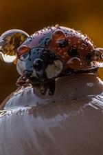 Ladybug, snail, water drops