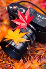 Preview iPhone wallpaper Leica camera, red maple leaves, autumn
