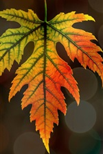 Preview iPhone wallpaper Maple leaf, bokeh, autumn