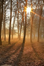 Preview iPhone wallpaper Morning, trees, sun rays, fog