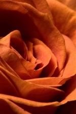 Preview iPhone wallpaper Orange rose close-up, petals, black background