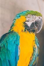 Parrot, macaw, bird photography