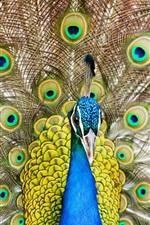 미리보기 iPhone 배경 화면 공작, 꼬리, 깃털