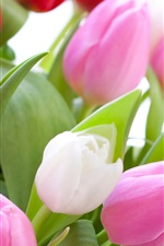 Preview iPhone wallpaper Pink and red tulips, white background