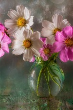 Preview iPhone wallpaper Pink and white kosmeya flowers, vase, water