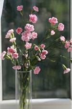 미리보기 iPhone 배경 화면 핑크 카네이션, 꽃, 꽃병, 창