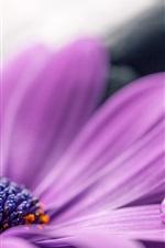 Preview iPhone wallpaper Purple gerbera petals macro photography, water drops