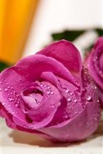 iPhone壁紙のプレビュー 紫のバラ、水滴、ボケ