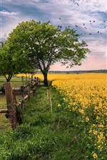 Preview iPhone wallpaper Rapeseed field, flowers, trees, grass