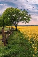 미리보기 iPhone 배경 화면 유채 꽃밭, 꽃, 나무, 잔디