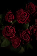 Red roses, bouquet, darkness