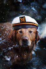 Retriever, dog, cap, water, boat, like a captain