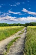 미리보기 iPhone 배경 화면 도로, 유채 꽃밭, 노란 꽃, 구름, 푸른 하늘