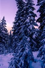 Aperçu iPhone fond d'écranNeige, sapins, hiver, crépuscule