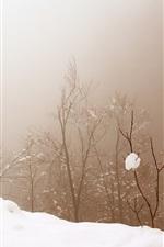 Neve, árvores, nevoeiro, inverno