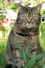 Preview iPhone wallpaper Spring, cat, flowers, grass