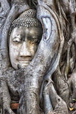 Preview iPhone wallpaper Thailand, Ayutthaya, buddha, tree