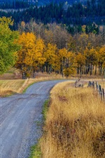 Trees, grass, road, fence, autumn, Canada
