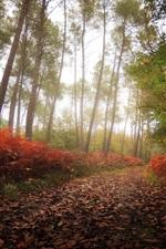 iPhone fondos de pantalla Árboles, camino, hojas, resplandor, otoño