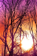 Preview iPhone wallpaper Trees, purple sky, sunset, sun