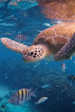 Preview iPhone wallpaper Turtle and fish, underwater, sea