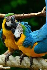 iPhone fondos de pantalla Dos pájaros, loros, guacamayo