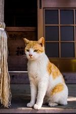 iPhone fondos de pantalla Dos gatos, puerta