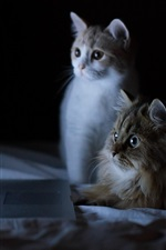 Preview iPhone wallpaper Two cats look at laptop screen, funny animals