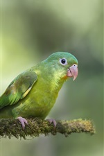 Preview iPhone wallpaper Two green parrots, blurry background