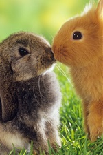 Preview iPhone wallpaper Two rabbits, gray and orange, grass