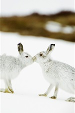 Preview iPhone wallpaper Two rabbits in snow, kiss