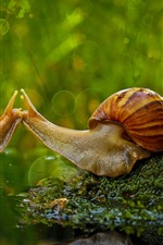 Preview iPhone wallpaper Two snails, moss, water