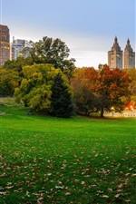 Preview iPhone wallpaper USA, New York, Central Park, skyscrapers, lawn, trees, autumn