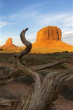 Preview iPhone wallpaper USA, Utah, Monument Valley, dead tree, grass