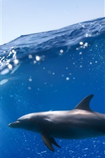 Preview iPhone wallpaper Underwater, two dolphins, blue sea