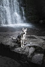Preview iPhone wallpaper Waterfall, dog, rocks