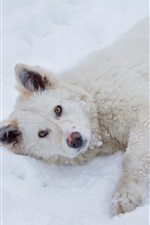 Preview iPhone wallpaper White puppy sleep on snow