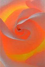 iPhone fondos de pantalla Rosa blanca, pétalos, luz de fondo