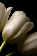 Preview iPhone wallpaper White tulips, black background