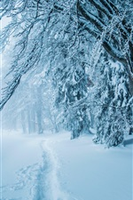 Preview iPhone wallpaper Winter, thick snow, path, trees