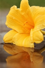 Preview iPhone wallpaper Yellow flower, water