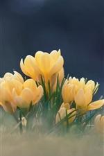 Preview iPhone wallpaper Yellow flowers, crocuses, bokeh