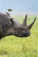 Preview iPhone wallpaper Africa, Rhino, birds, grass