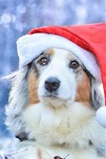 Preview iPhone wallpaper Australian shepherd, Christmas hat