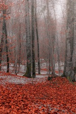 Preview iPhone wallpaper Autumn, forest, trees, red leaves, snow