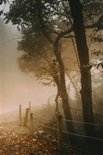 Autumn, trees, road, fence, leaves